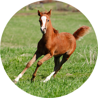 Equine Feed Additives for Horses