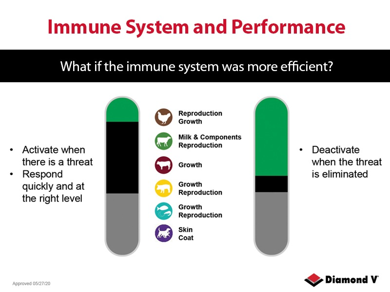 Immune System Performance Graph