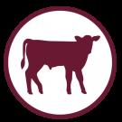 LiquiCare RTU Beef Calf Icon