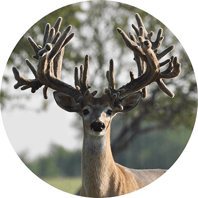 Deer and Small Ruminant Feed Additives