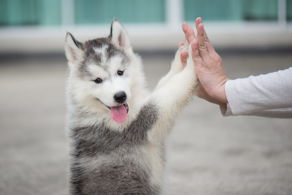 Top Six Training Tips for New Puppy Parents