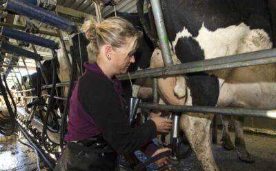 Before the Sun Rises: Dusk. Dawn. Dairy. Diamond V – In Celebration of International Women's Day