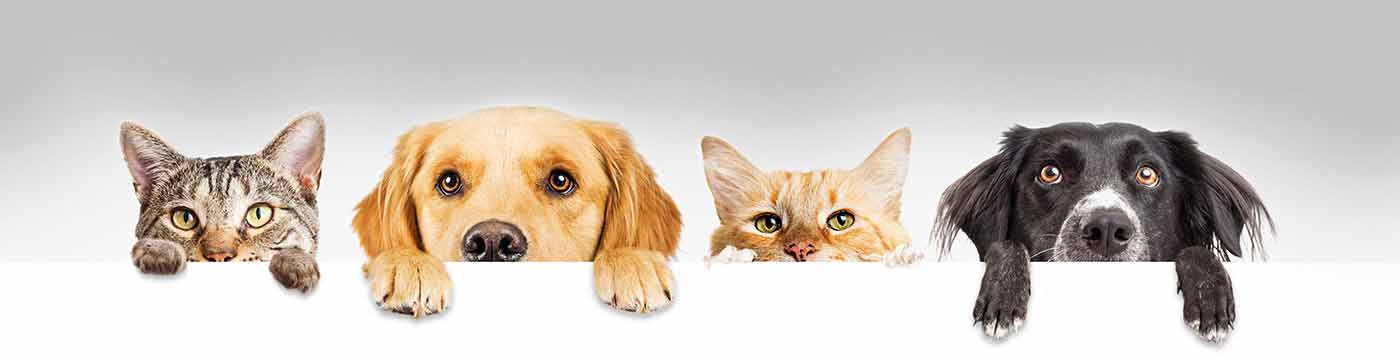 Dogs and Cats Peeking Over a Wall